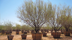 1-4_thumbs_tree-sales