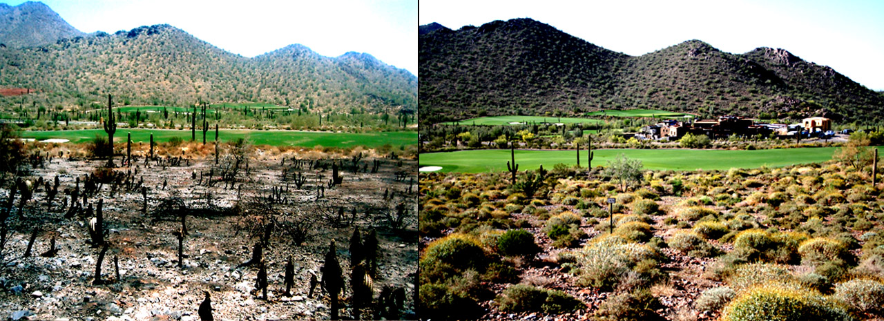 Before photo showin the effects of the fire on the local vegetation. After photo showing the finished result of the revegetation matching the indigenous material.