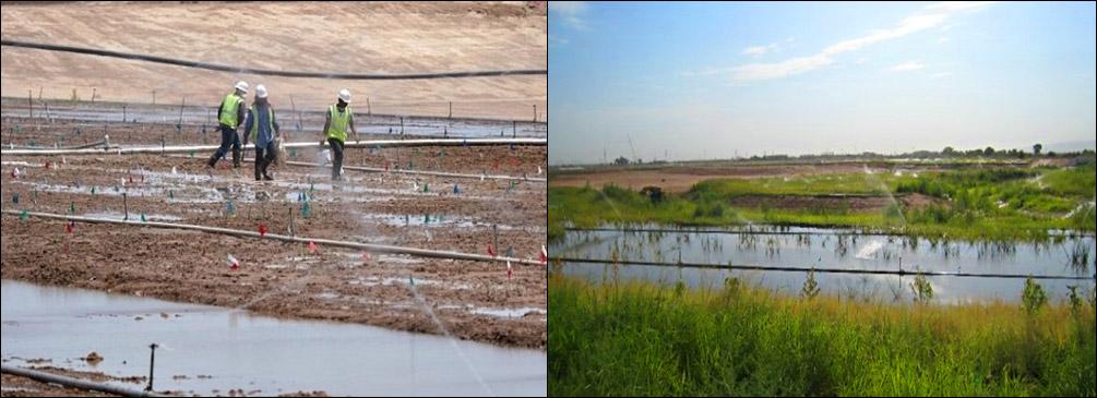project-tres-rios